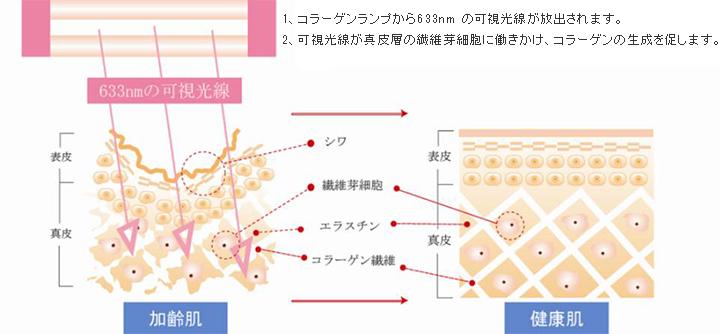 コラーゲンマシンの仕組み
